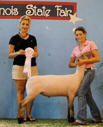 Daniels Club Lambs - Portland, IN
